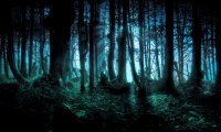 Night forest environment